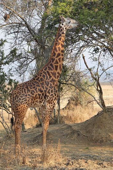 Living Travel East Africa Rwanda Akagera Wildlife Park