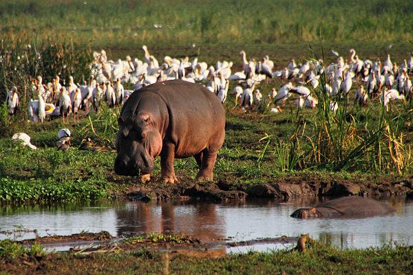 Living Travel - East Africa - Tanzania