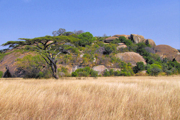 Living Travel East Africa Tanzania Serengeti Scenery