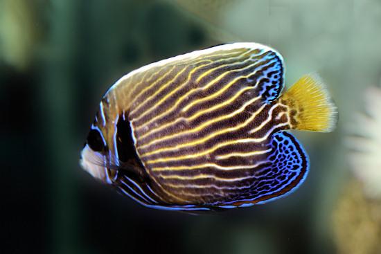 LIVING TRAVEL - AUSTRALIA - Queensland - Fish of the Great