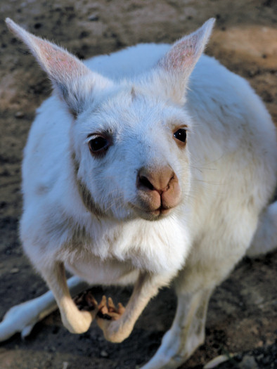 LIVING TRAVEL - AUSTRALIA - South Australia - Cleland