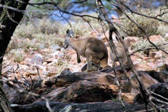 LIVING TRAVEL - AUSTRALIA - South Australia - Flinders