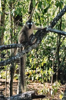 Living Travel Madagascar Berenty Lemurs 2
